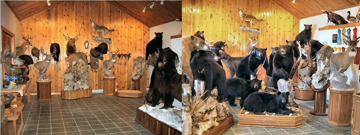 Pennsylvania Taxidermist Brown Bear Taxidermy, Pine Grove PA. Licensed, Insured, Full Time Taxidermist