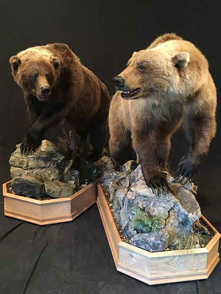Bear Taxidermist In Pennsylvania - Brown Bear Taxidermy